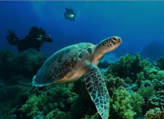 Potápění s želvami v Egyptě (foto: Filip Kříž)